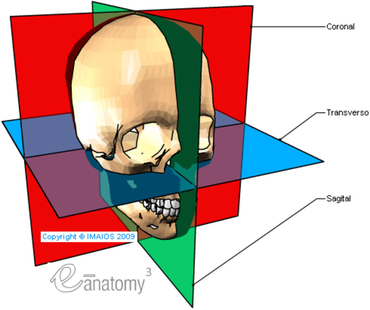 Anatomy Trains 3rd Edition Book Posters additionally Body Planes 2C directions 2C Cavities together with File Anatomical directions  fr furthermore Canine Anatomy likewise Planes And Motions Diagrams. on anatomical planes dorsal